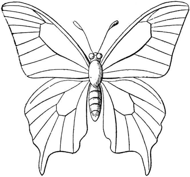 b for butterfly coloring pages - photo#26