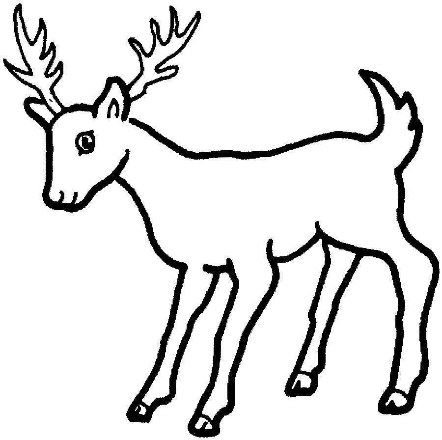 deer coloring pages - photo#34