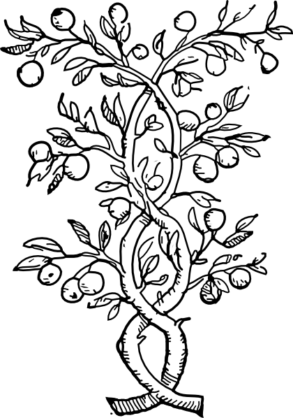 Rainforest plants and flowers coloring pages - photo#7